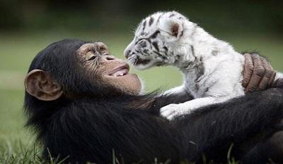 Elképesztő barátságok
