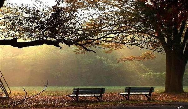 Társas magány